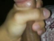 Arab big zeb
