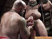 MUSCLE BULL PLAY IN THE DUNGEON